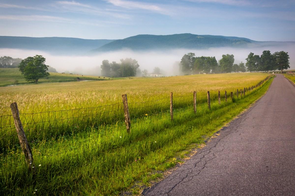 Federal judge shuts down West Virginia hemp farm over seed allegation